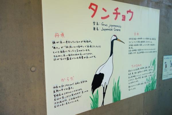 動物の説明2