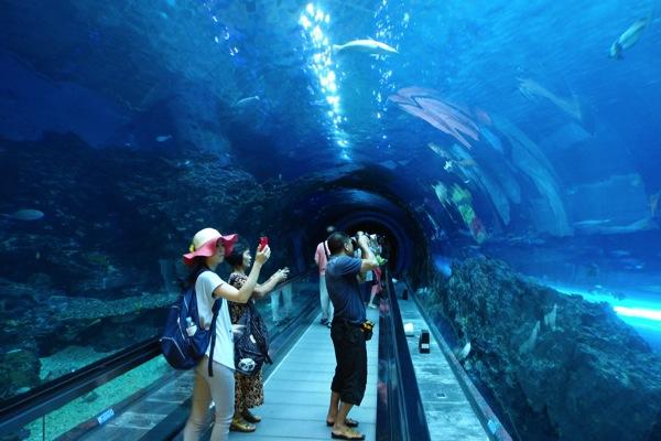 国立海洋生物博物館3