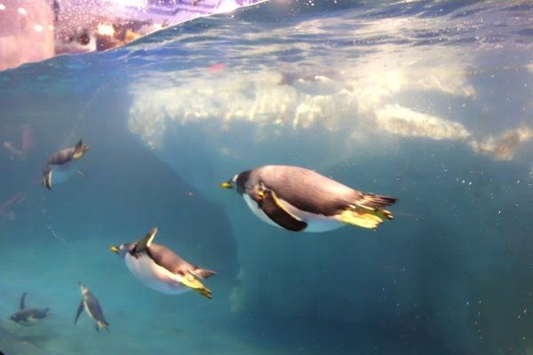 国立海洋生物博物館6