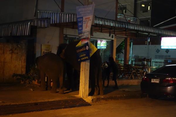ウドンタニの象
