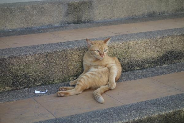コーンケンのネコ