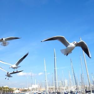 バルセロナのヨットハーバー