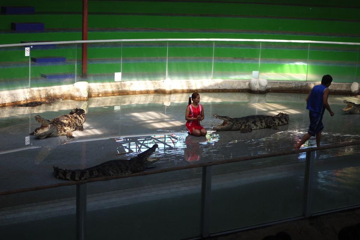 crocodilefarm5
