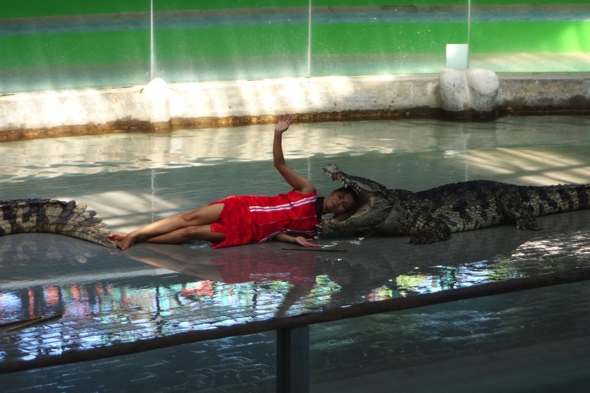 crocodilefarm7