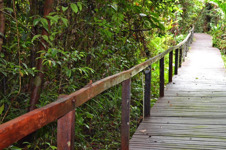 gunungmulunationalpark6